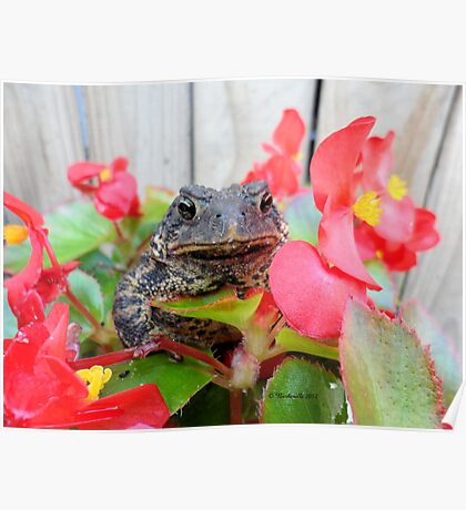 Adorable Toad with little red flowers. Poster