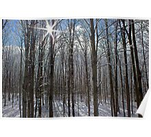 Shinning Through the Snow Covered Branches Poster