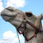 Happy Camel gazing up at the clear blue sky. by Barberelli