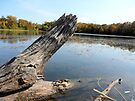 Frog Jumping off a tree log at the pond! by Barberelli