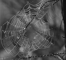 Spider Web by Claudia Harrison