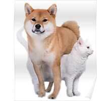 Doge and Cat Poster