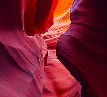 Desert Symphony by Brandt Campbell