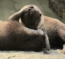 Otters cuddling by Matt Fox