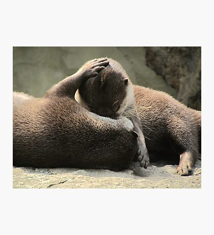 Otters cuddling Photographic Print