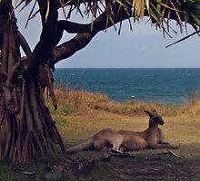 Under the shade of a Pandanus Tree by myraj