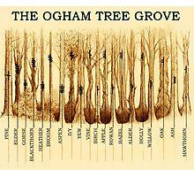 Ogham Tree Grove Photographic Print
