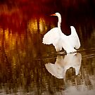 The Egret Has Landed by George Lenz