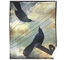 Blackbirds Chat Poster