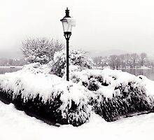 Snowy Lamp Post By The River Danube by Menega  Sabidussi