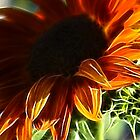 Sunflower Fractals by Tracy Deptuck