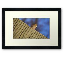 bird sitting upon curtain Framed Print