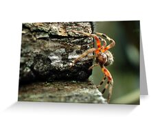 Spider At Work Greeting Card