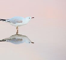 gull ripple by Georgie Hart