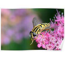 Hoverfly  [ Helophilus pendulus ] Poster