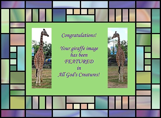 Banner - AGC - Featured for Giraffes by aprilann