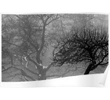 7.2.2014: Apple Tree, Oak Tree (Winter version) Poster