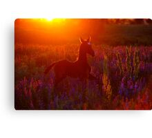Solar foal Canvas Print