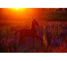 Solar foal Photographic Print