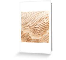 Silky Pleats Greeting Card