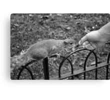 Squirrel, St James's Park, London Canvas Print