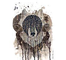 Wolf - ram Photographic Print
