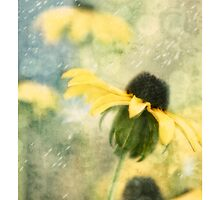 Coneflowers by Nikella