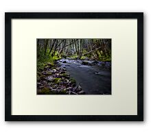 Deep In The Forest It Glows Framed Print