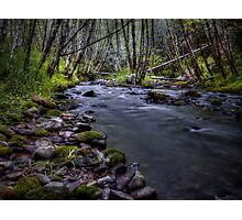 Deep In The Forest It Glows Photographic Print