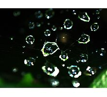 Web Droplets Photographic Print