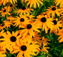 Black Eyed Susans Sticker