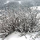 Snow covered by Arie Koene