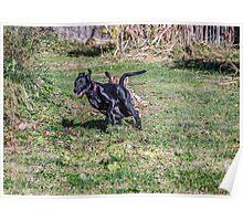 Savannah chases Max Poster