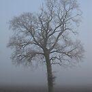 Misty morning oak by KatDoodling