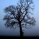 Misty morning oak - enhanced by KatDoodling