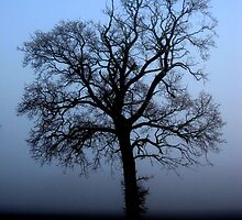 Misty morning oak - enhanced by KatDoodling