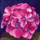 Summer Hydrangea by Ken Powers