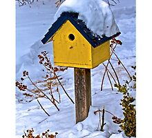 2014 Feb The Bird House by Rick  Grisolano Photography LLC