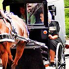 Amish Buggy by Polly Peacock