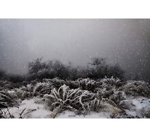 """Winter Snowstorm"" Photographic Print"