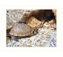 Box Turtle Art Print