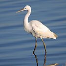 Little Egret by Jennifer Sumpton
