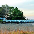 White Bridge Over The Marsh by Cynthia48
