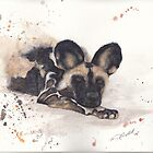 African Wild Dog by Morgan Campbell