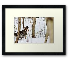 About to Make a Run For It! Framed Print