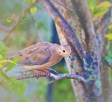Sweet and gentle dove by ♥⊱ B. Randi Bailey