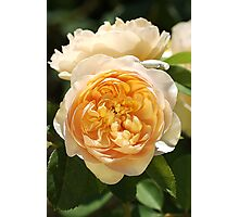 Yellow Rose Delights Photographic Print