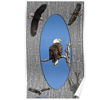 Life Of The American Bald Eagle Poster