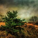 Ainsdale Dunes in winter by Tarrby