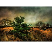 Ainsdale Dunes in winter Photographic Print